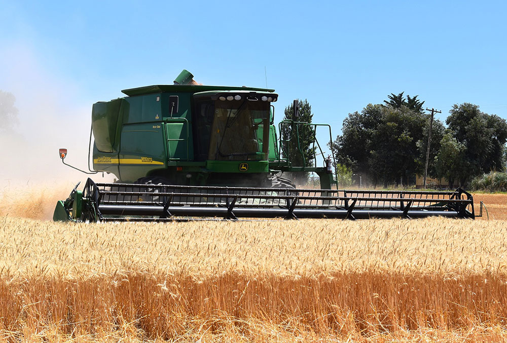 phenitsa wheat harvester